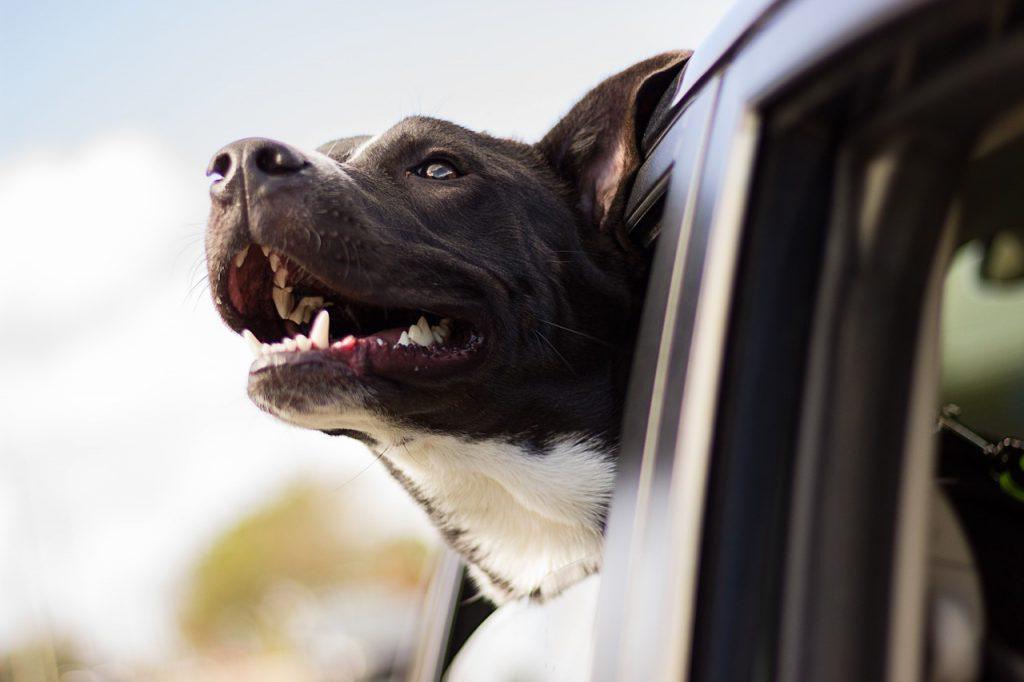 dog ownership